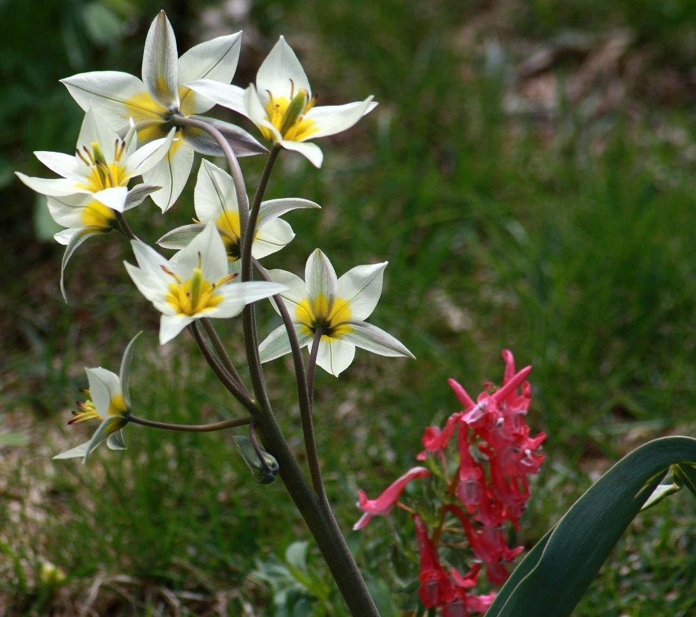 Photo in Random #flower #ypa2013 #white #yellow