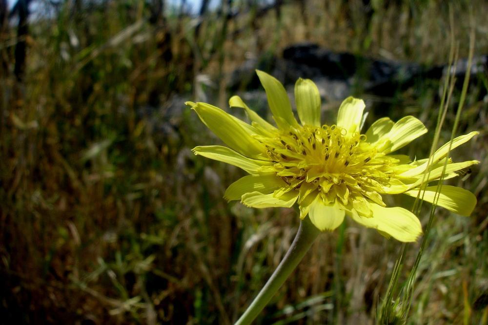 Photo in Macro #macro #flower #yellow