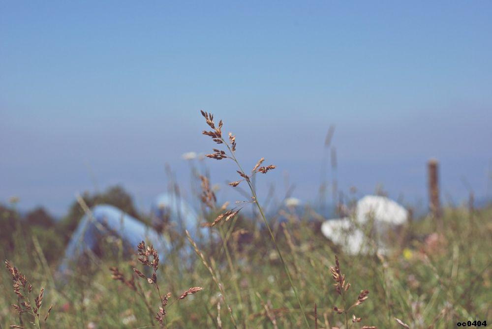 Photo in Nature #dream #rüya #oc0404 #onur #güner #güray #nature #abstract