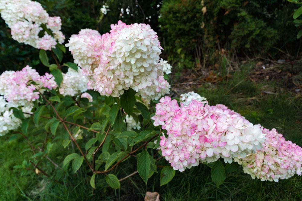 Photo in Nature #norway #summer #flower #flowers #green #tormod lindøe