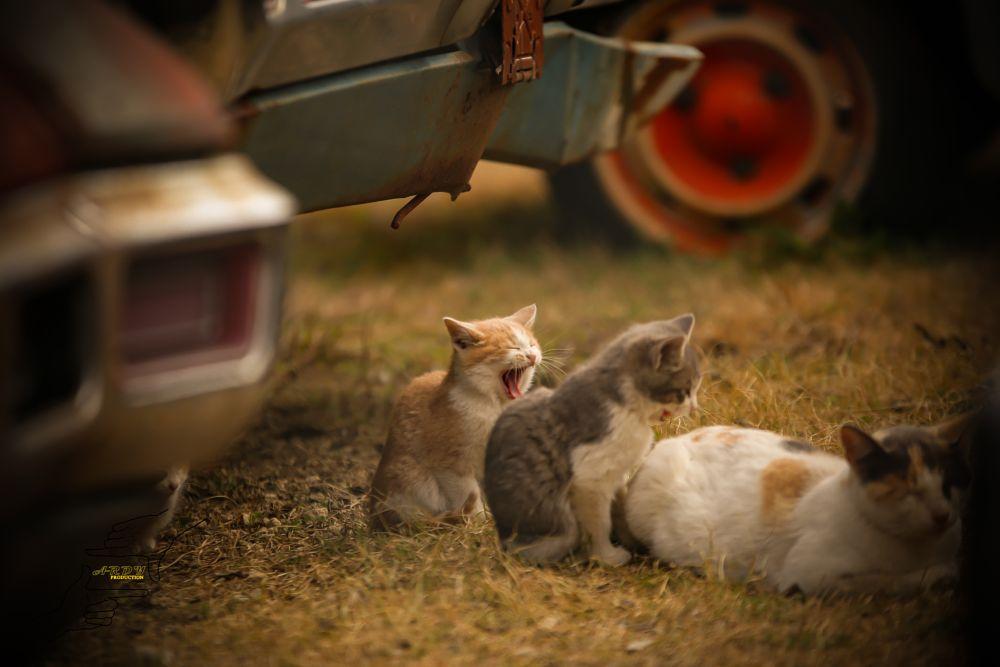 Photo in Animal #pet #cat #cute #kitty #dallas