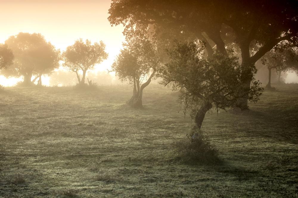 Photo in Landscape #sunrise #trees #alentejo #portugal