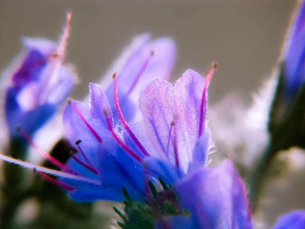 Photo in Nature #milan353 #flower