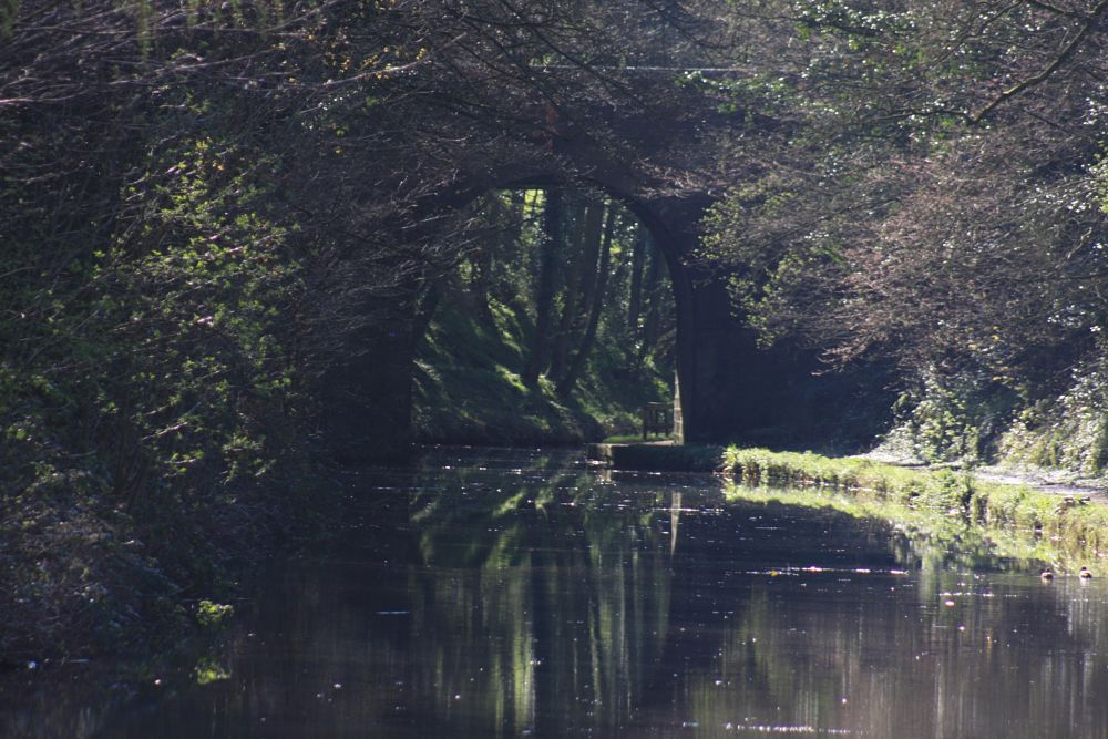 Photo in Rural #deep cutting #canal #lancaster canal #dark #water #spring