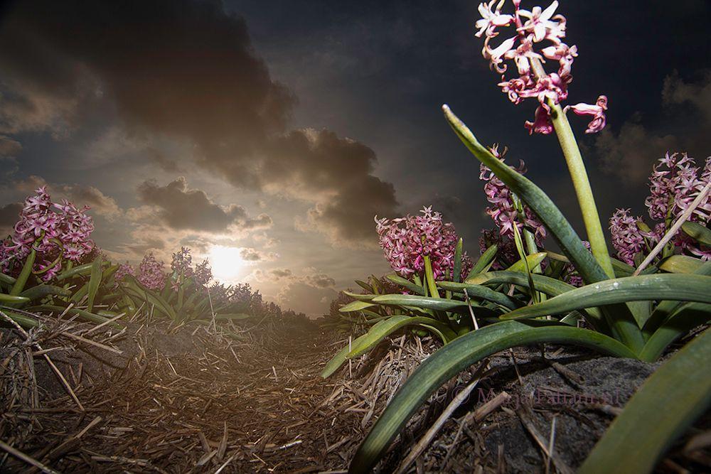Photo in Landscape #flower #field #pink.