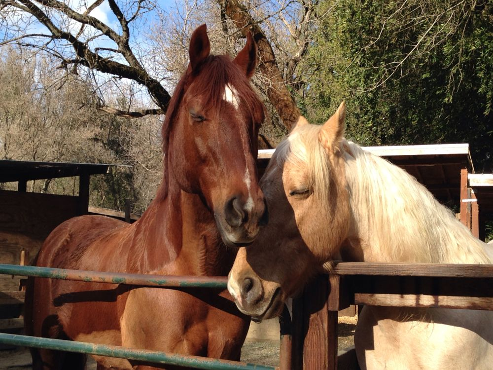 Photo in Animal #horses #animalcaptures #equestrian #horse #norcal #steed #horse whisperer #love #horselover