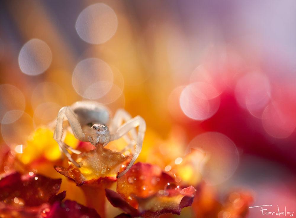 Photo in Macro #autumn #bokeh #ambiente #macro art #fardels #spider #crap