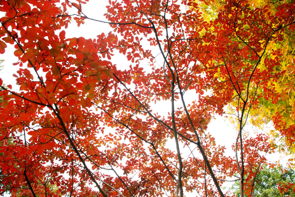 Photo in Nature #fall