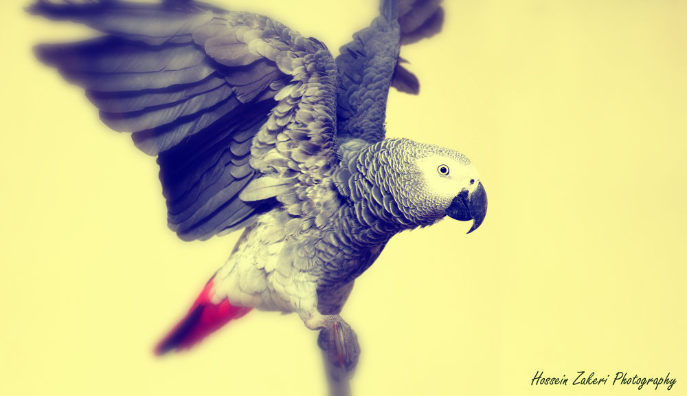Photo in Landscape #bird #color effect #africa #togo #kasko