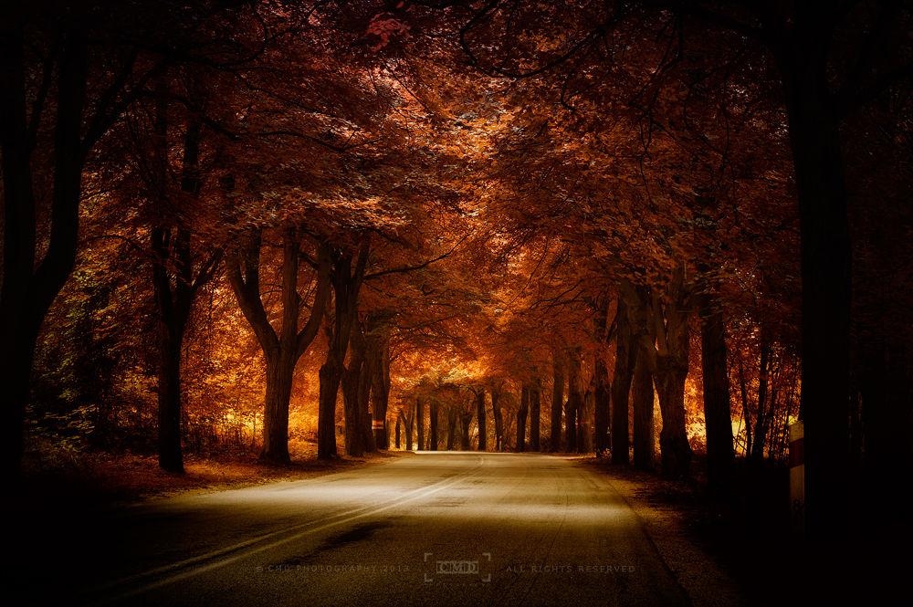Photo in Random #ypa2013 #road #trees #light #red #sunlight