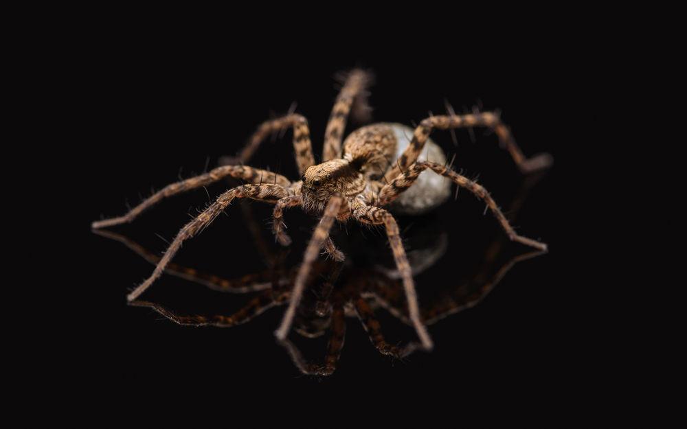 Photo in Macro #ypa2013 #macro #spider