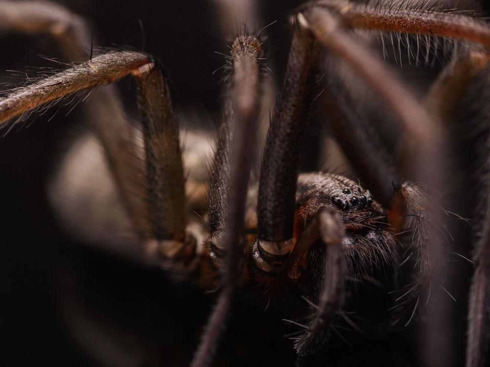 Photo in Macro #ypa2013 #macro #spider #series
