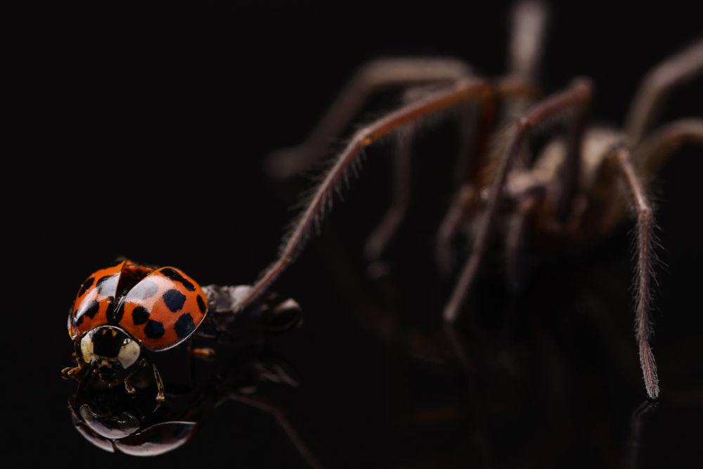 Photo in Macro #ypa2013 #macro #spider #ladybug #series