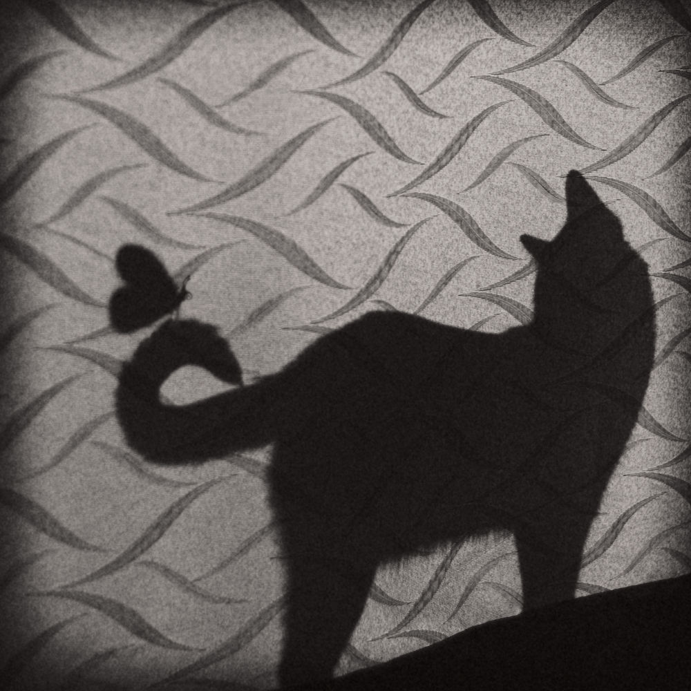 Photo in Black and White #cat #kitty #butterfly #shadow #curtain #friends #black #pet