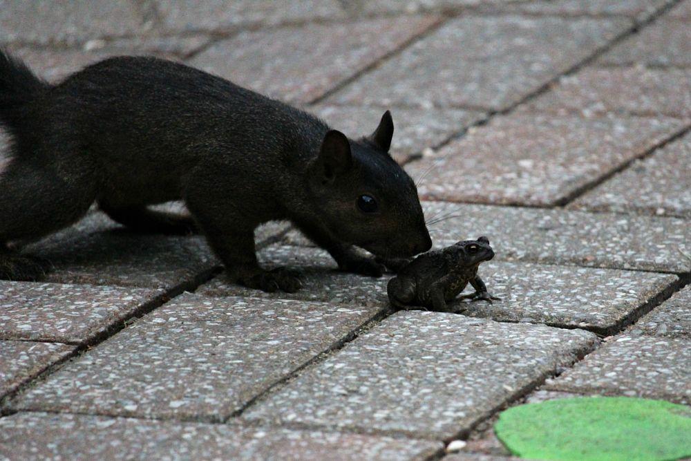 Photo in Animal #frog #grenuille #squirrel #ecureuil #animal #garden #parc