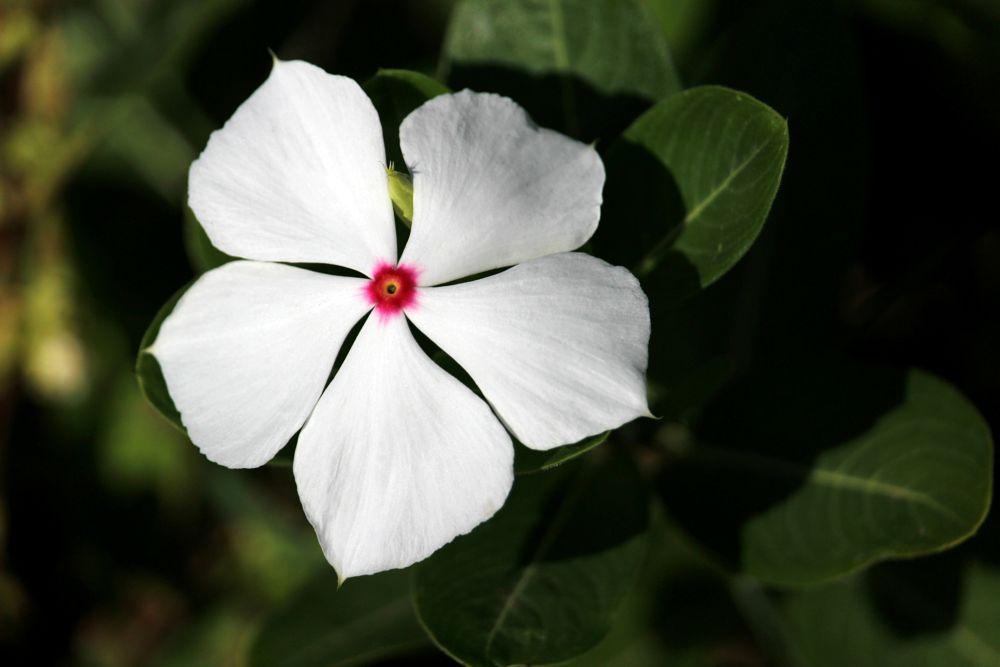 Photo in Nature #flower #fleur #kwiat #nature