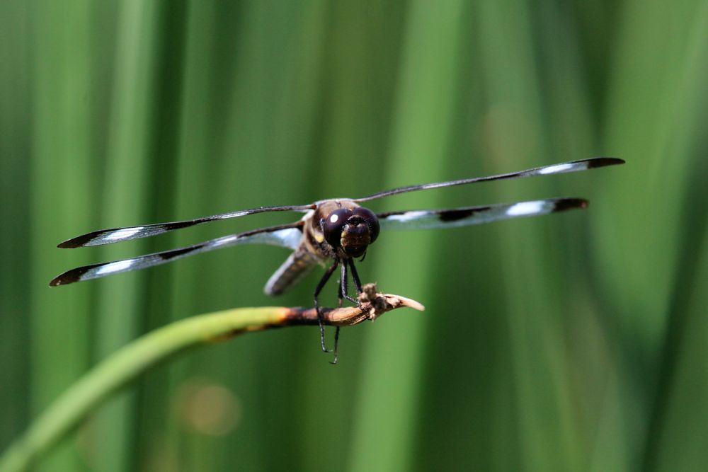 Photo in Nature #libellule #insect #nature #animal #dragonfly