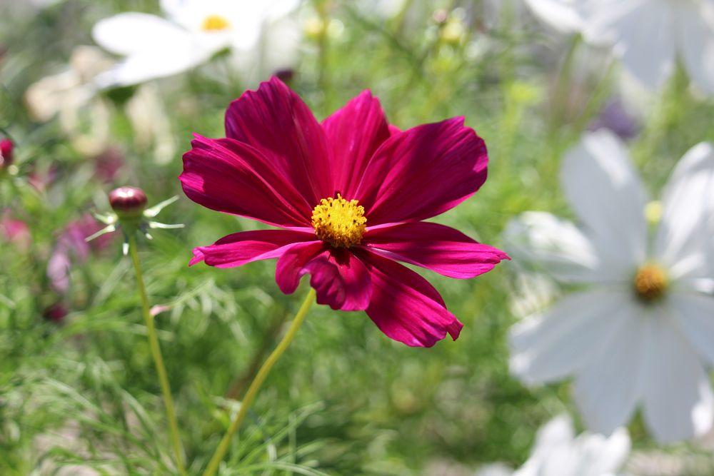 Photo in Nature #flower #fleur #kwiat #jardin #garden #nature