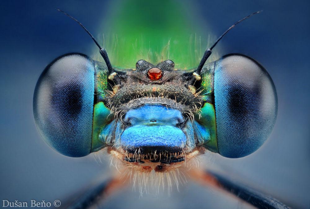 Photo in Macro #macro #damselfly #micro #photo #nature #portrait