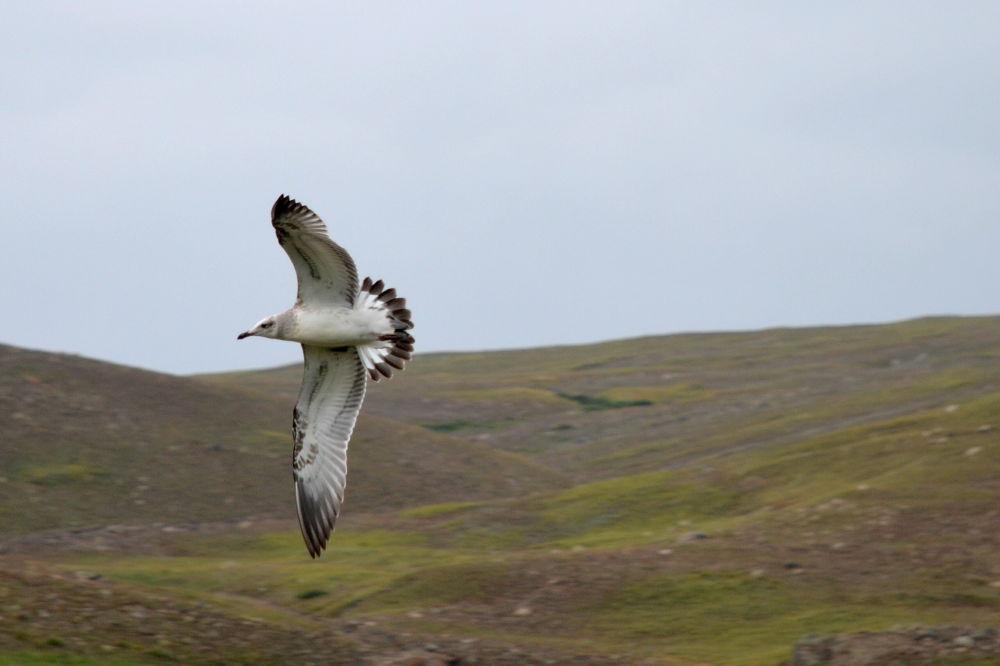 Photo in Portrait #bird #flying #landscape #deosai #pakistan