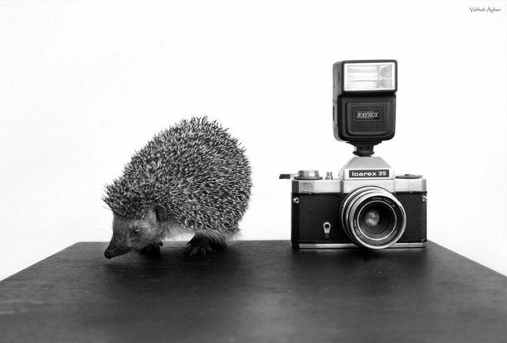 Photo in Animal #hedgehog #photocamera