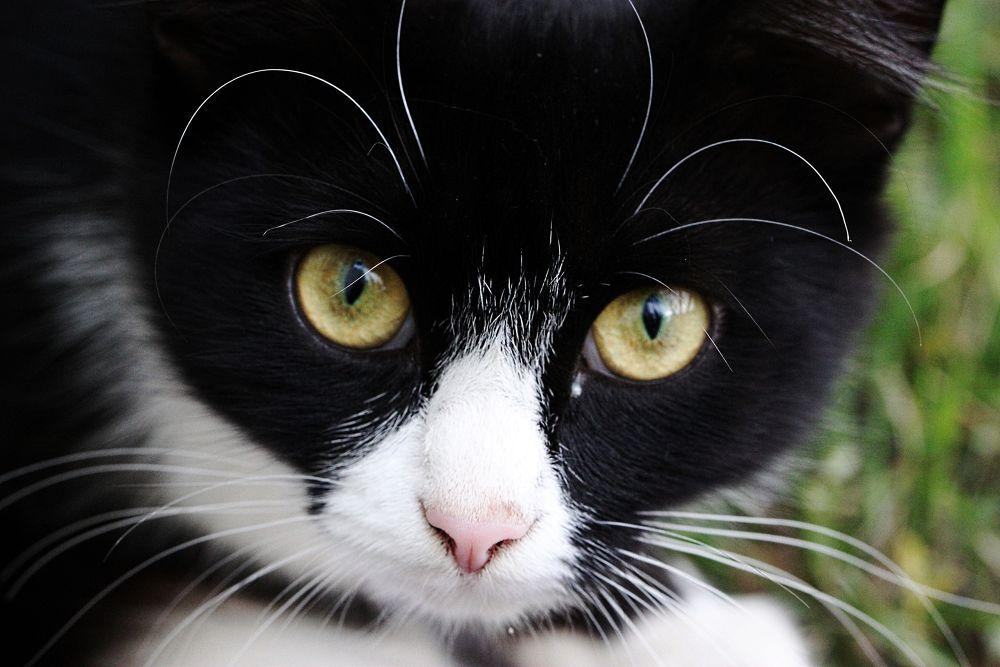 Photo in Random #2013 #portrait #cat