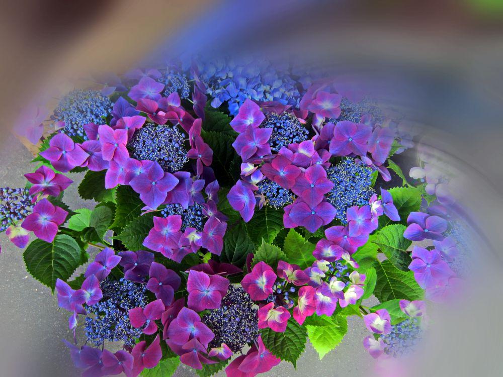 Photo in Random #flowers #green #pink