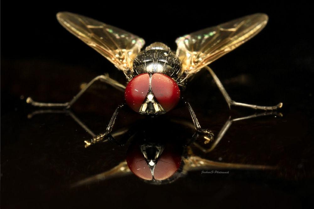 Photo in Macro #flies