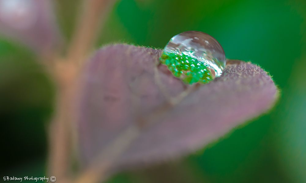 Photo in Macro #water drop reflection #flowers natural reflection on