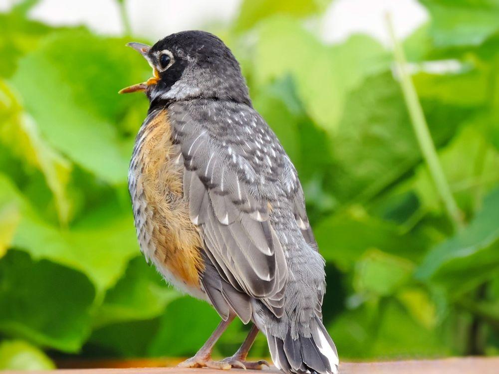 Photo in Random #bird #animal #nature