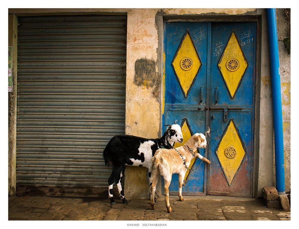 Photo in Travel #travel #india