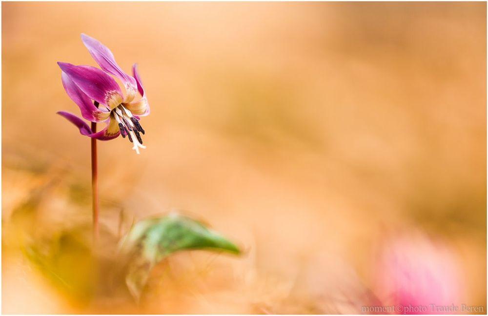 Photo in Landscape #macro pflanze