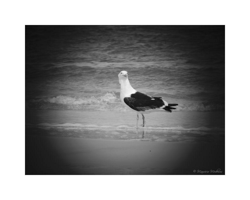 Photo in Black and White #black&white #sea #seagull