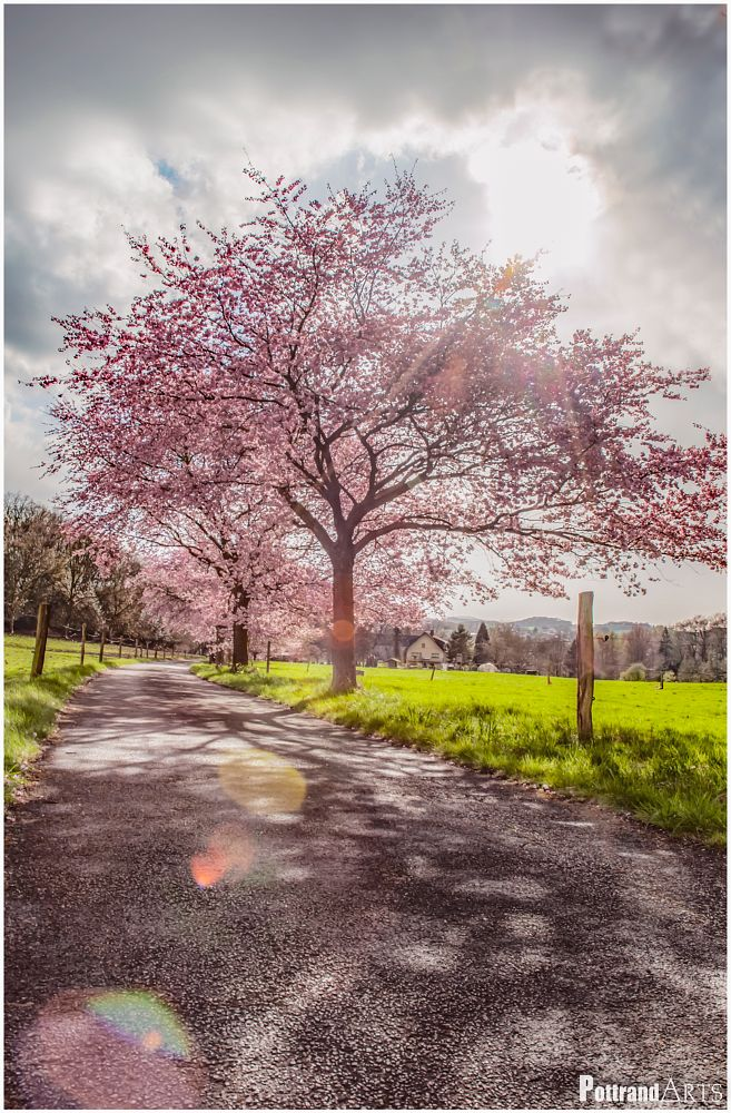 Photo in Nature #spring #landscape #amazing #nature #cherry