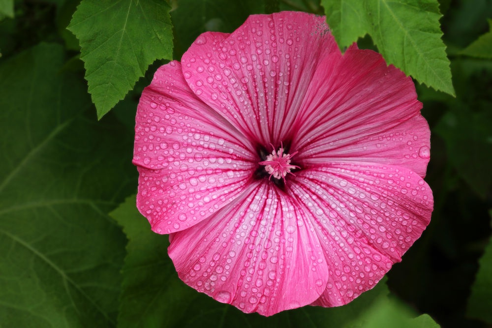 Photo in Nature #flower #floral #pink #pretty #canada