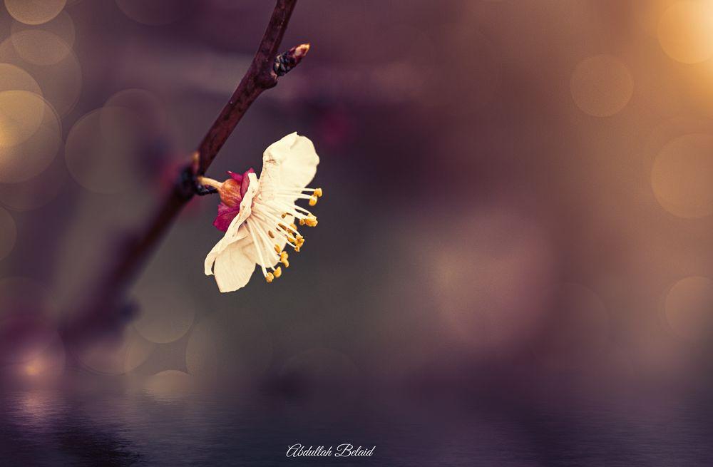 Photo in Random #libya #flower #nature