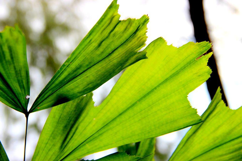 Photo in Nature #big leaf #green color #brilliant color