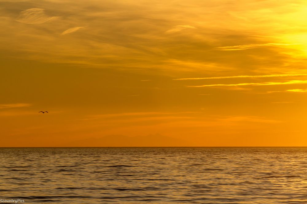 Photo in Landscape #bird #sea #water #gold #evening #seascape #sun #cloud #motion #lonely #mirage