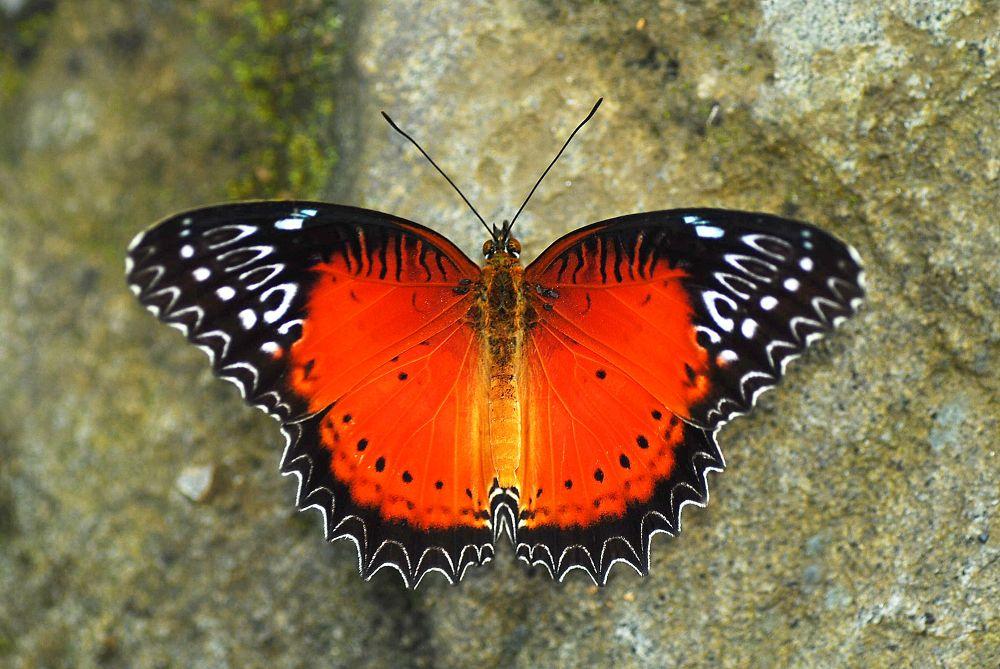 Photo in Random #butterfly #nature #macro #wildlife
