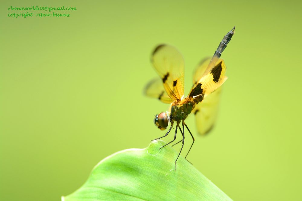 Photo in Random #wildlife #dragonflt #macro
