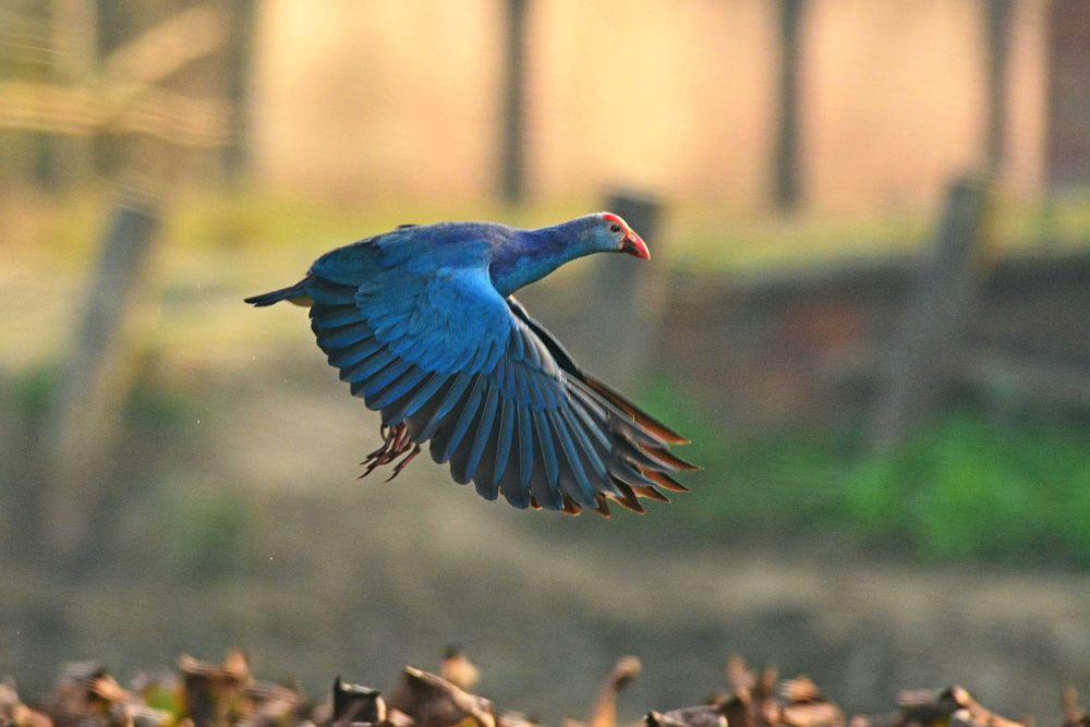Photo in Animal #birds #wildlife #nature