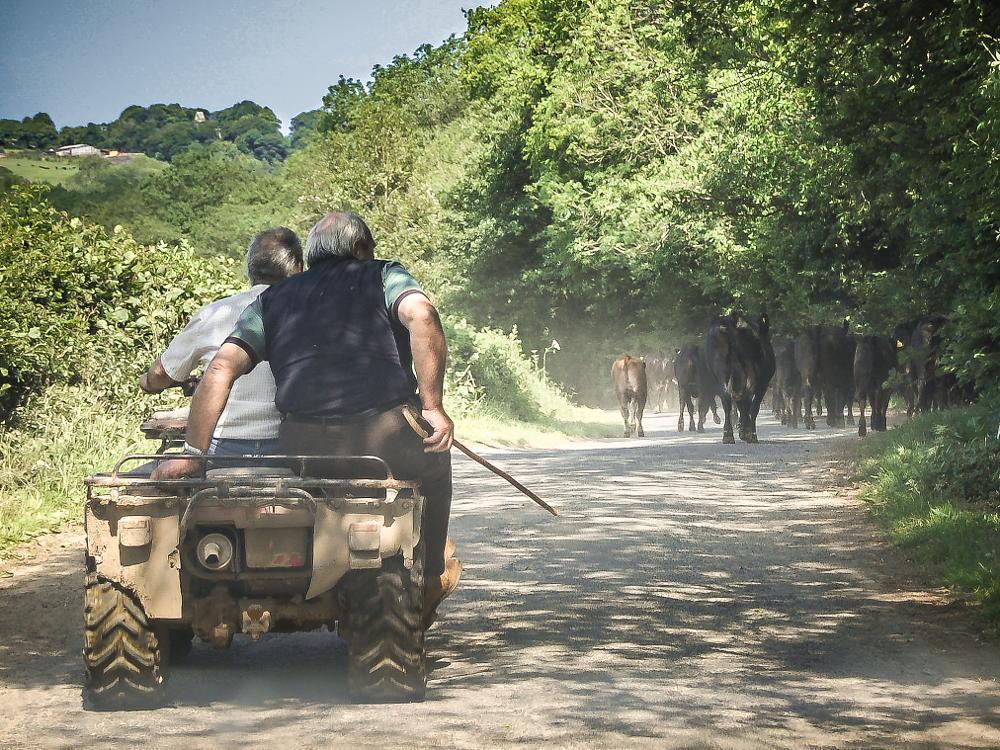 Photo in Random #country #caws #landscape #wiejskie życie #krowy
