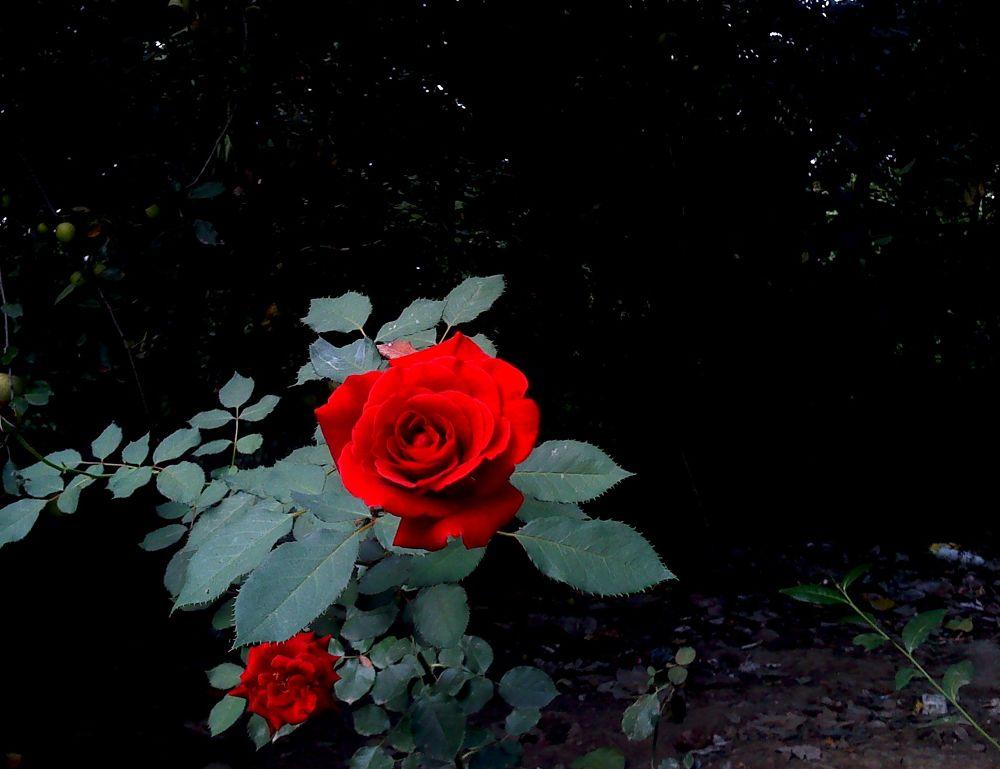 Photo in Random #flower #iran #gilan #matak