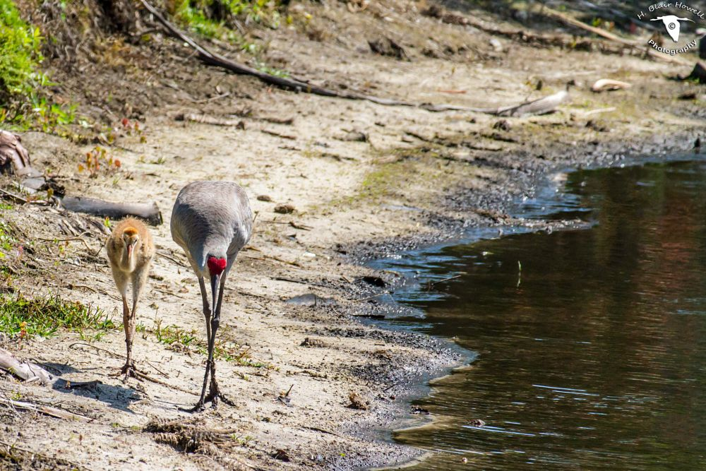 Photo in Animal #bird #birds #animal #animals #nature #wildlife