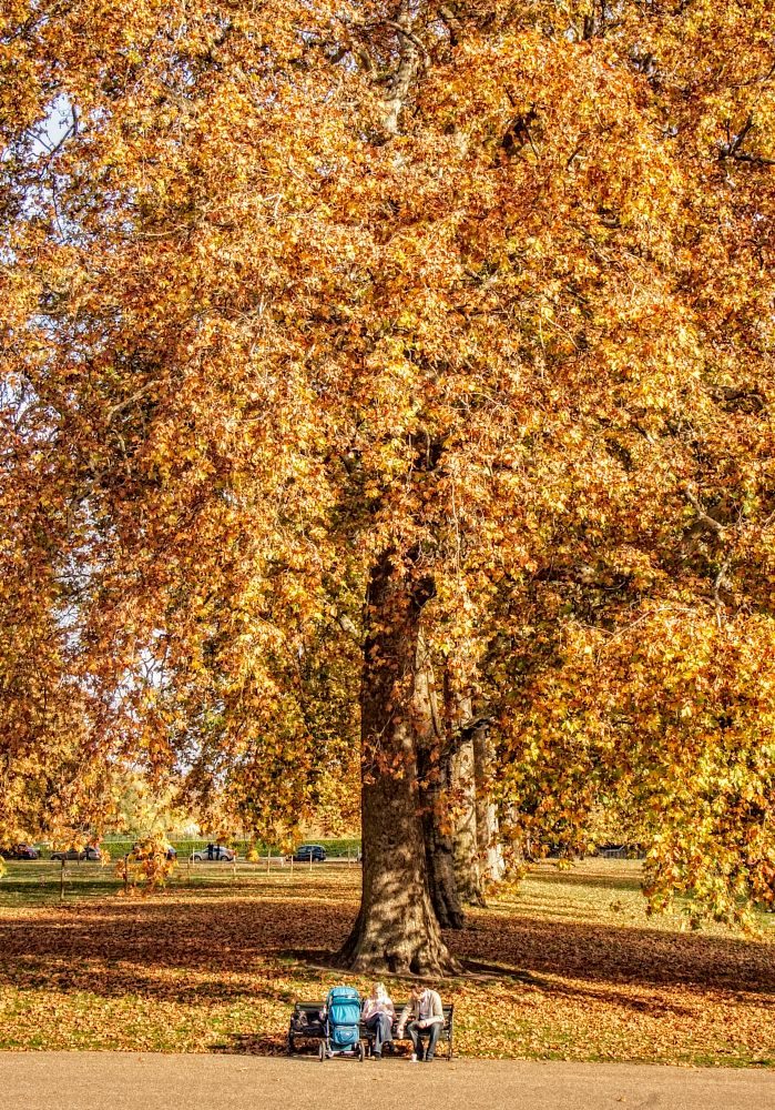 Photo in People #autumn #tree. #hyde park.