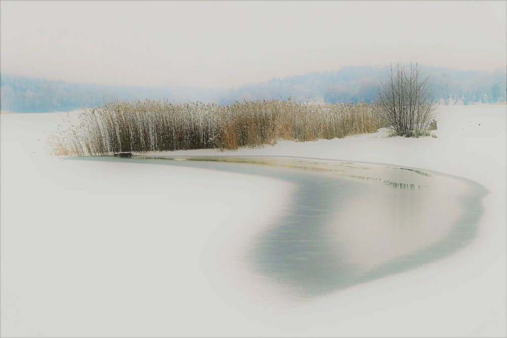 Photo in Nature #winter #cold #landscape #nature