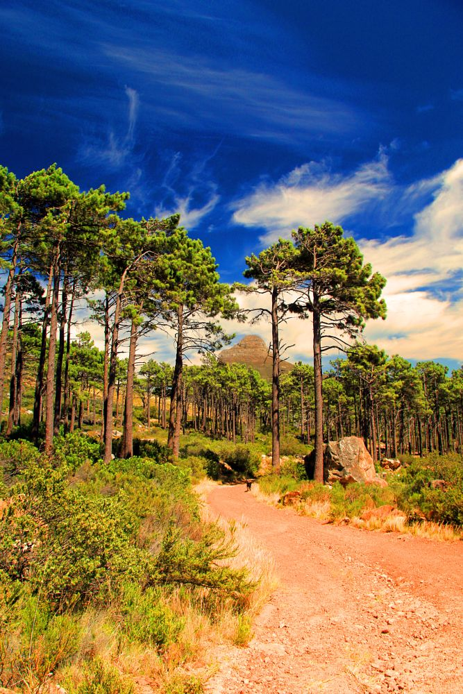 Photo in Nature #trees #path #mountain