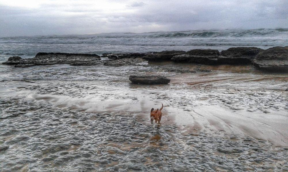 Photo in Nature #sintra #magoito #praia #beaches #portugal
