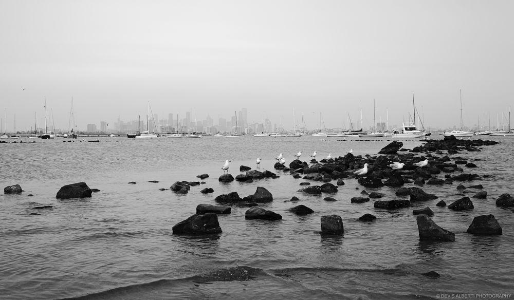 Photo in Black and White #melbourne #australia #city #skyline #victoria