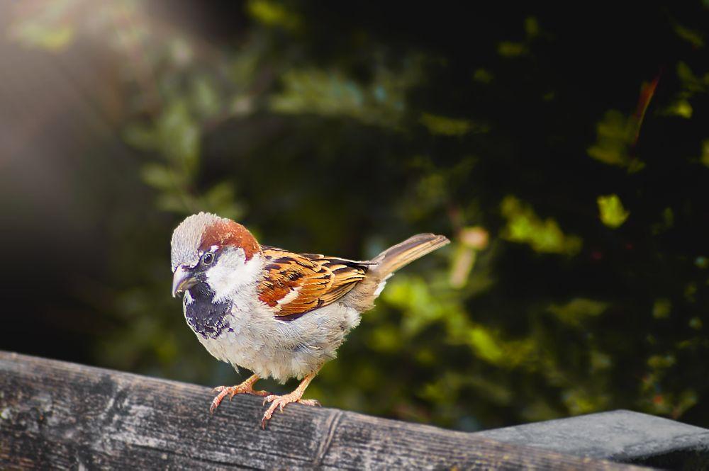 Photo in Animal #sparrow #bird #birds #animal #animals #spring #kus #serce